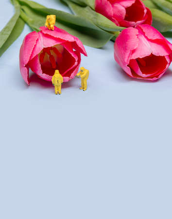 The team investigates the quality of tulip flowers. Concept research Banco de Imagens - 73923460