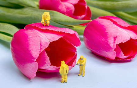 The team investigates the quality of tulip flowers. Concept research