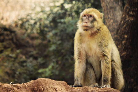 monkey in the forest Stock Photo - 13169007