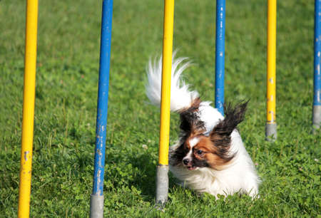 fetch: Dog in the race