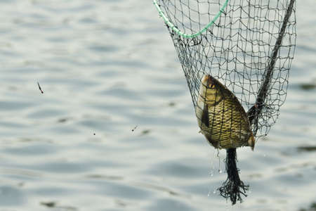 fish in the net photo