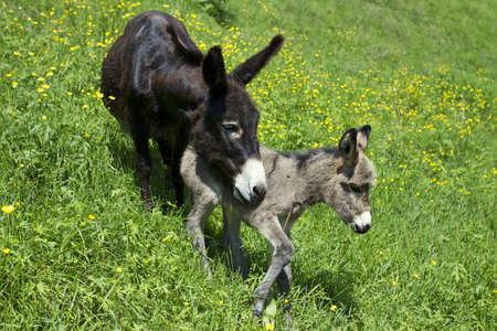 donkeys in the grass photo