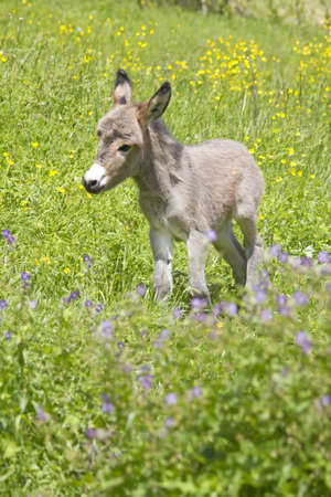 little donkey in the flowers photo
