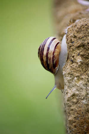 Snail on leaf photo