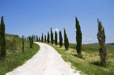 vineyard plain: landscape in Tuscany Stock Photo