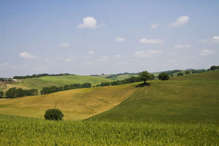 vineyard plain: Tuscany landscape Stock Photo