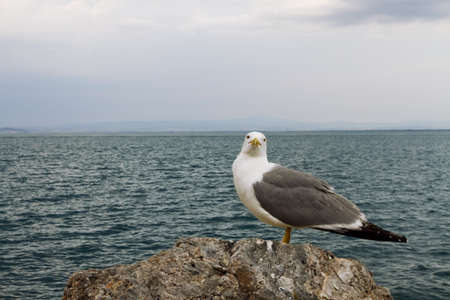Seagull at the port Argentario, Tuscany photo