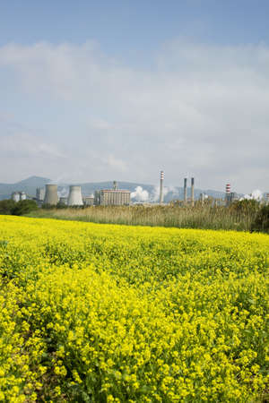 Yellow flowers with a factory in the background