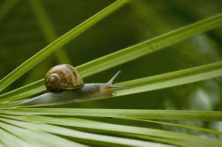onward: caracol en la hoja de palma Foto de archivo