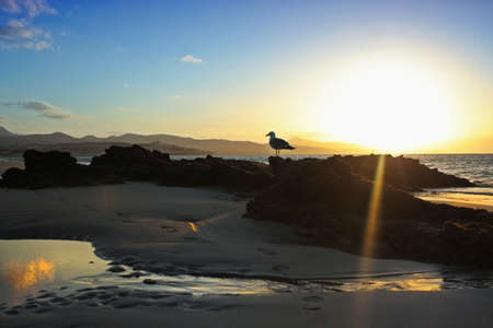 Silhouette of a seagull at sunset photo