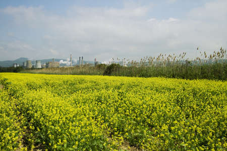 Field of flowers with a factory in the background photo