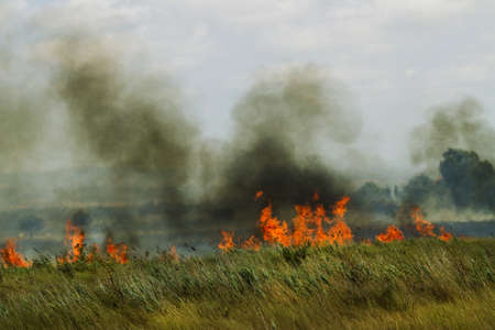 Burn fields