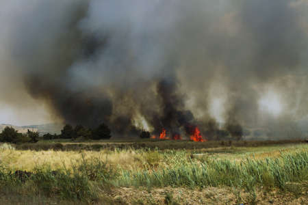 Burn fields photo