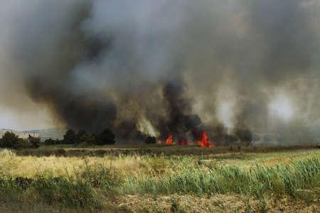 burning bush: Burn fields
