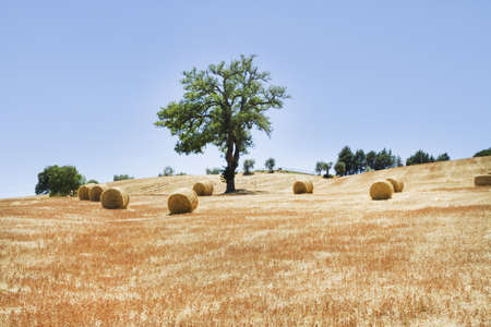 hayfields in Tuscany Stock Photo - 14523622