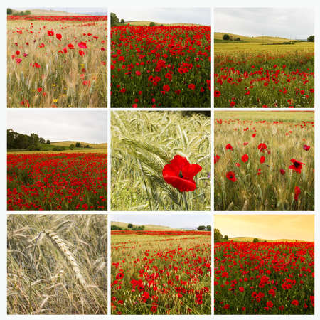 Collage with poppies photo