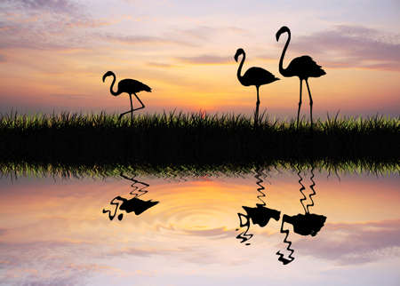flamingos at sunset Stock Photo - 15729467