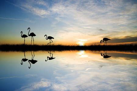 flamingos at sunset photo