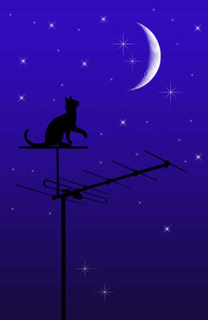 cat on the roof  photo
