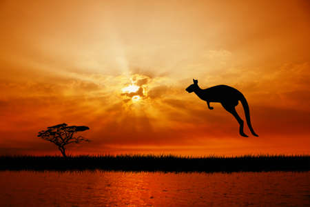 kangaroo photo