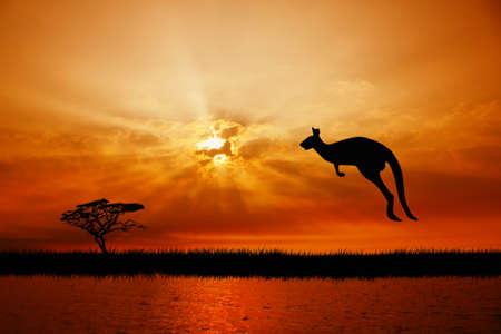 kangaroo: kangaroo