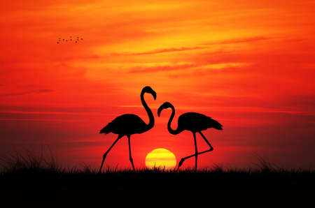 Pink flamingos at sunset photo