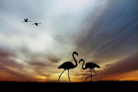 Pink flamingos at sunset photo