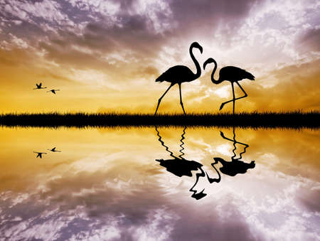 Pink flamingos in love photo