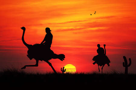 race ostriches photo