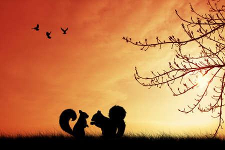 skylight: Squirrel in love