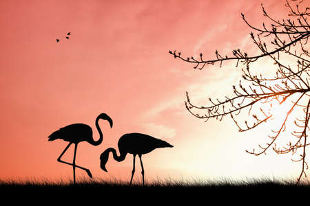 Pink flamingo in love photo