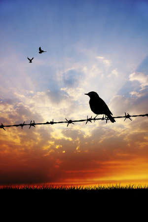 bird on barbed wire Stock Photo - 17325787