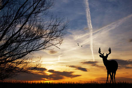Deer silhouette at sunset photo