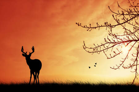 Deer silueta al atardecer photo