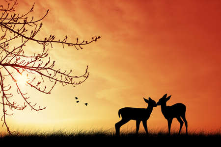 Deers al atardecer photo