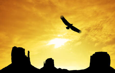 monument valley: eagle in Monument Valley