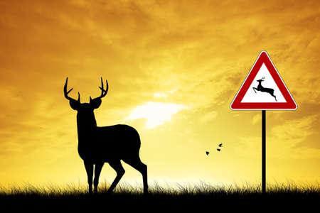deer crossing photo