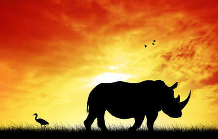 wildlife reserve: Rhino at sunset