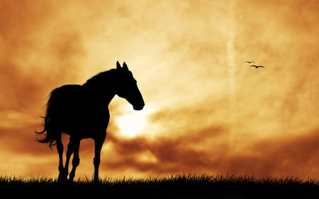 the country: Horse silhouette