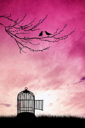 skylight: Cage for bird