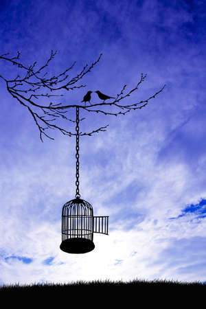 skylight: bird cage at sunset