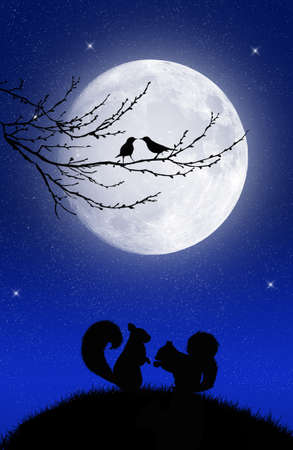 Squirrel in the moonlight photo