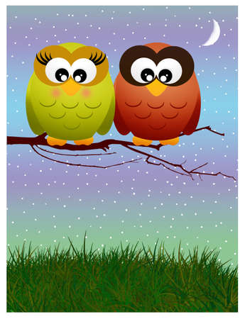 Owls in love on branches photo