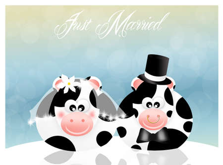 Wedding cows photo
