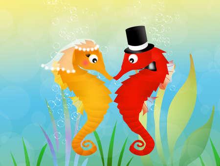 valentine s day beach: seahorses in love in the aquarium