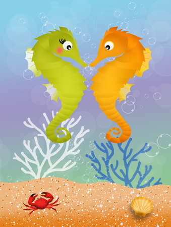 seahorses in love photo