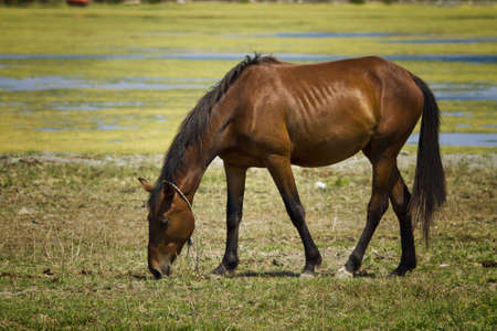 gelding: Horse in the meadow Stock Photo