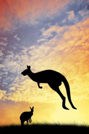 Kangaroos in Australian landscape photo