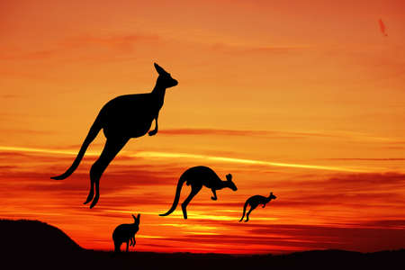 Kangaroos in Australian landscape Stock Photo