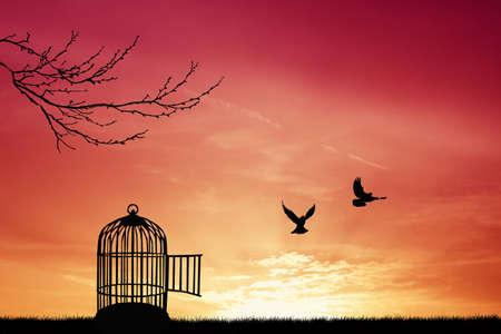 skylight: Bird cage silhouette